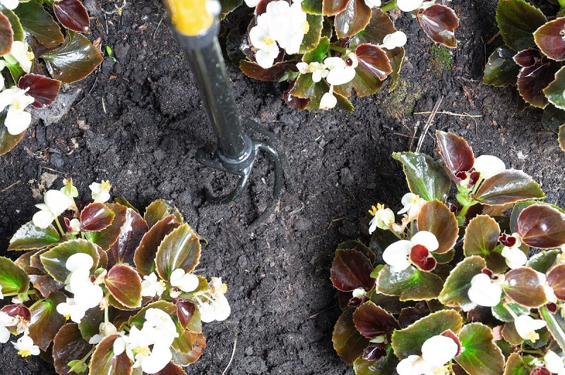 Tornadica-mini-cultivar-fleur